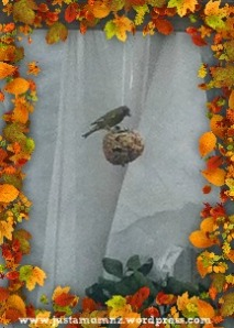 Bird on the Birdfeeder!